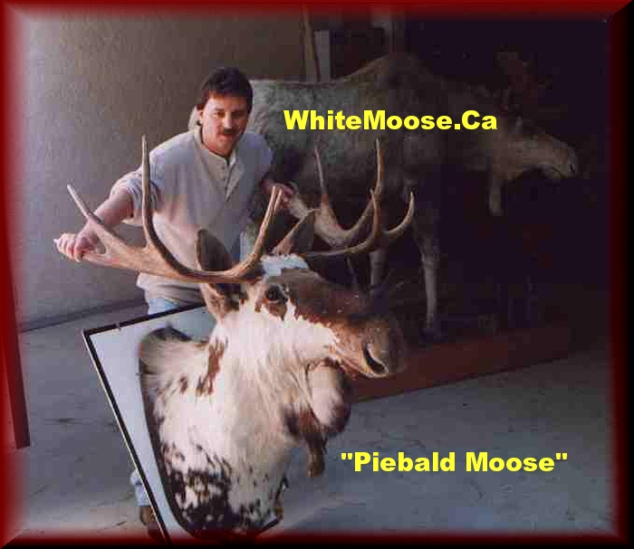 moose chat sites Going moose hunting  hunting chat statistics threads 50,596 posts 595,935 members 10,077 active members 196 welcome to our newest member, larakapoor icon legend.